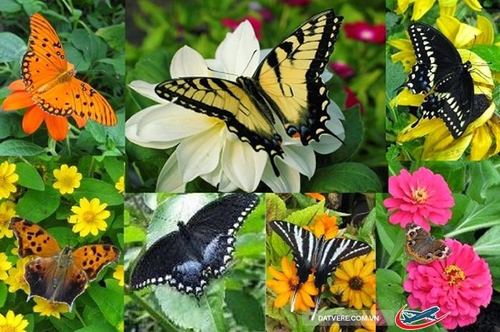 Những cánh bướm sặc sỡ ở vườn bướm Phuket