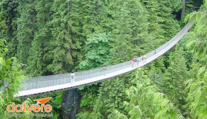Cây treo nổi tiếng thế giới ở Vancouer