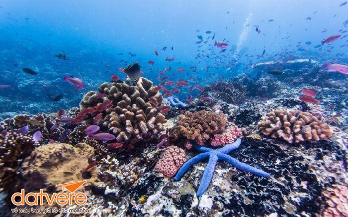 Trải nghiệm lặn biển thú vị ở Philippines