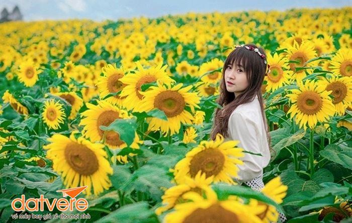 Chụp hình tại vườn hoa hướng dương Vinh - Nghệ An