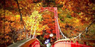 Khung cảnh thiên nhiên Nhật Bản